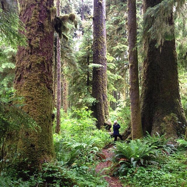 Nitinat Lake Vancouver Island Wild Coast Tents